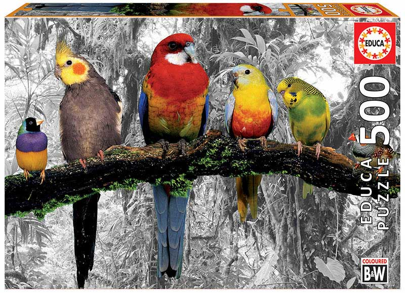 "Pusle ""Jungle Parrots"" 500 tk"