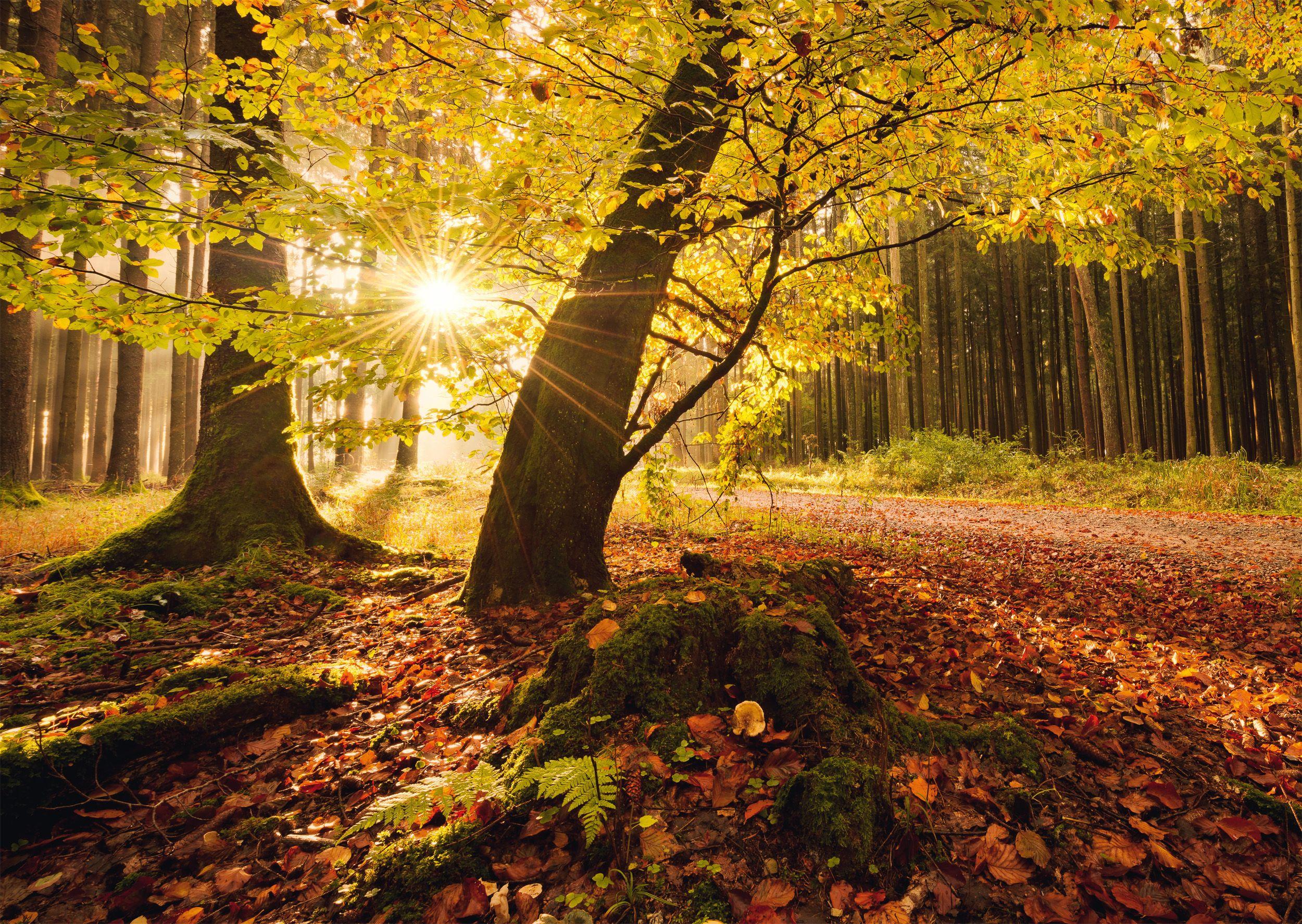 """Pusle """"Autumn magic"""" 1000 tk"""