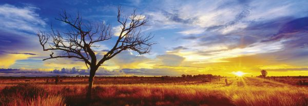 "Pusle ""Desert Oak at Sunset"" 1000 tk"